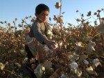Child cotton pickers in Uzbekistan