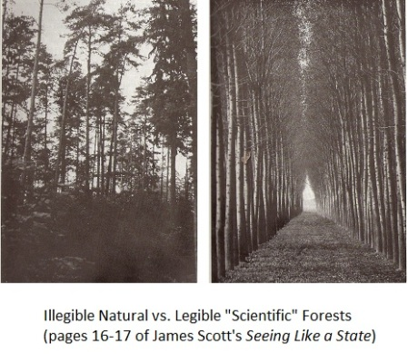 The natural forest lived; the planned forest eventually died.