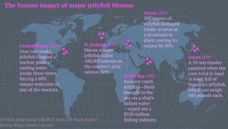 jellyfish-map-featured