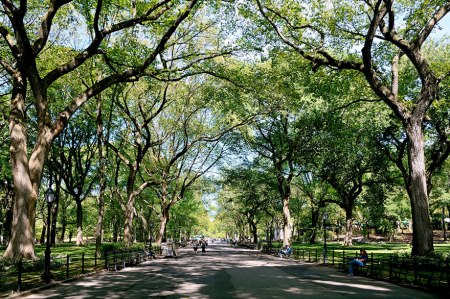 Central Park, New York City, in summer