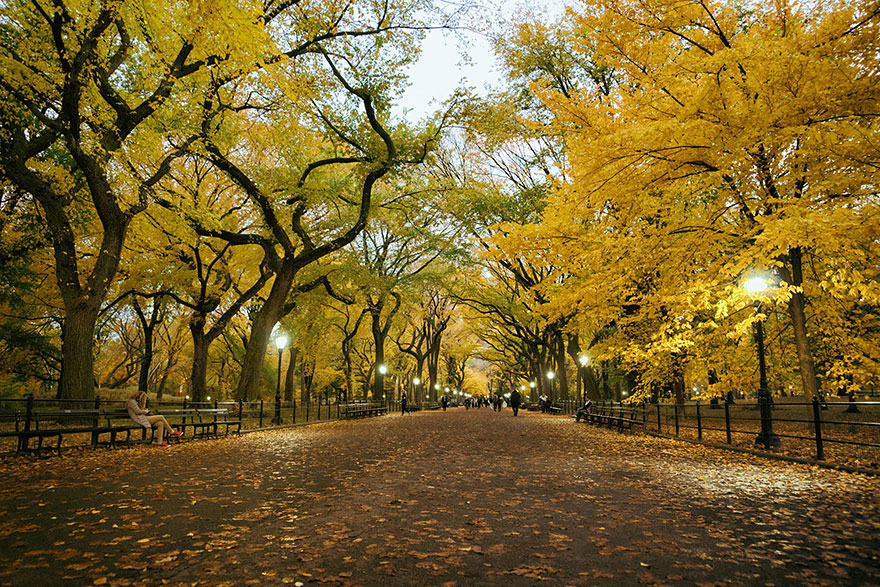 Central Park, New York City, in autumn