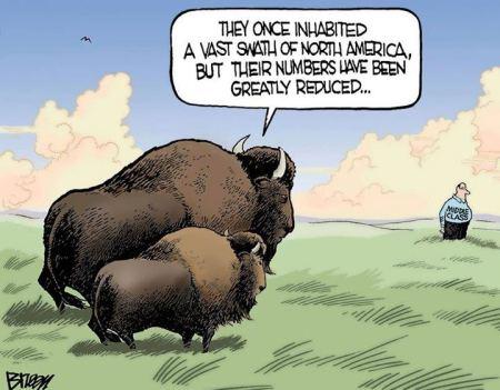 acartoon-middleclass-bison