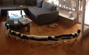 panoramic-photo-fail-cat-e-pillar-latest