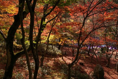 Autumn in Kobe, Japan's, Zuihoji Park. Click to enlage.