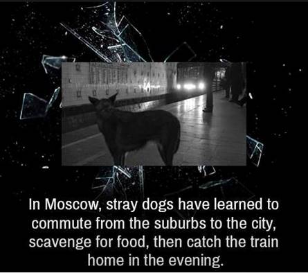 moscow stray dogs