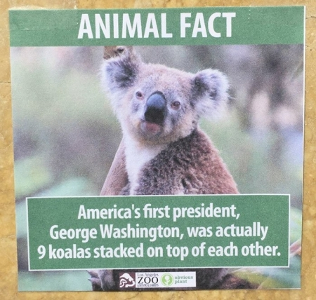 animalfact31