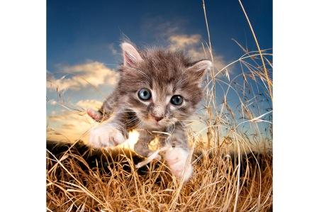 kittenpouncesite_2